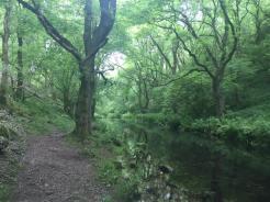 River Lathkill under cover